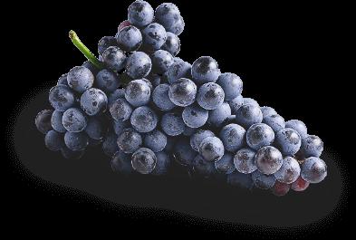grapes-pinotnoir